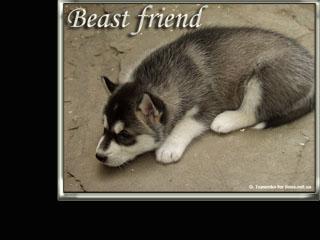 обойки с лучшими друзьями: животными!